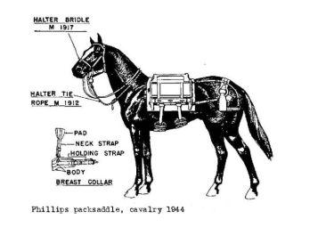 navy mule